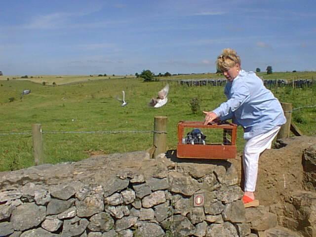 Releasing homing pigeons near Priddy