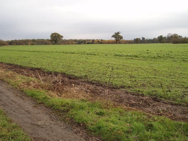 Farm land in Tatton Park