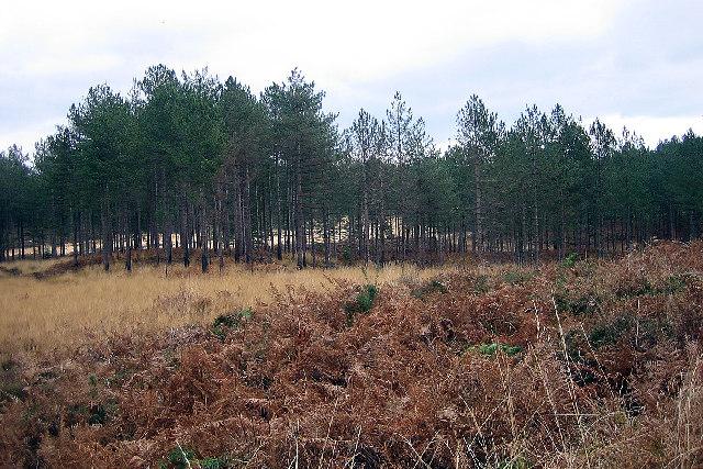Northport Heath, Wareham Forest, Dorset