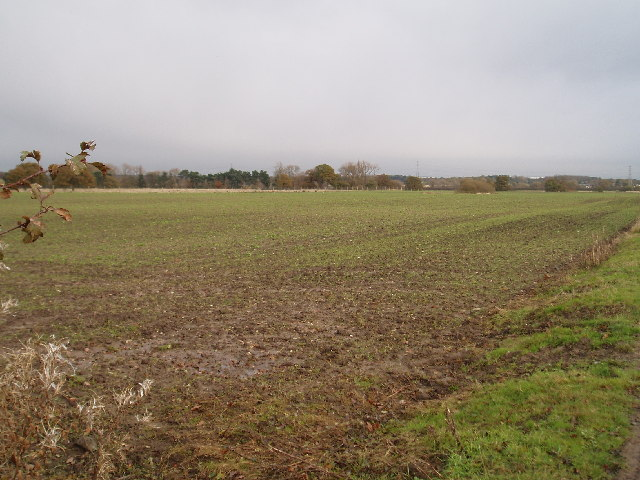 Farm land in Tatton Park