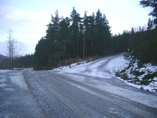 Forest Tracks in Contin Forest