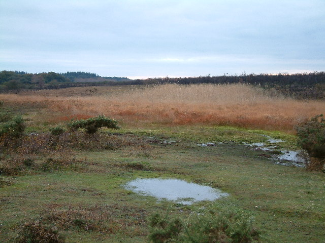 Marshy Area, Shipton Bottom, Near East Boldre, New Forest