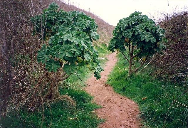 Path on Burgh Island, Bigbury