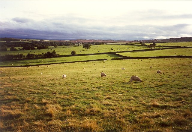 Fields in the evening light, Warsill