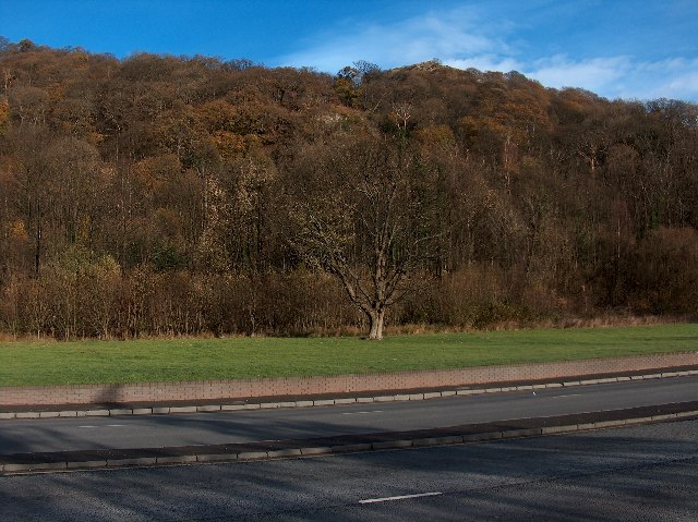 Auchentorlie Wood, nr Milton, Dunbartonshire