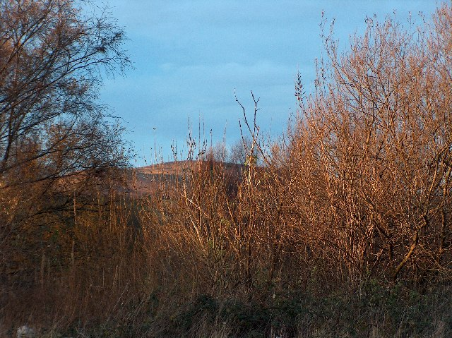 Woodland, Dumbarton