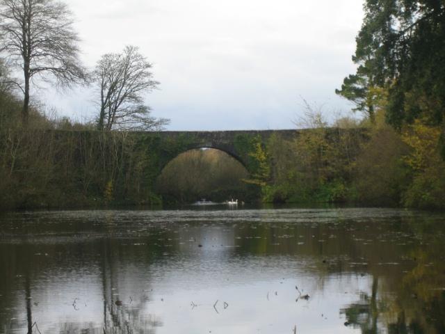 Bridge by Lily Ponds