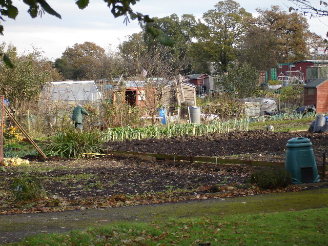 Allotment Gardens at Hatchford Brook, Sheldon