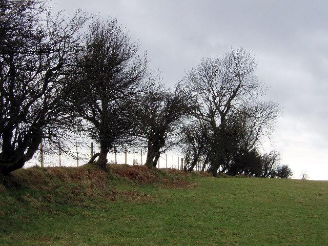 Trees in winter above Pentwyn