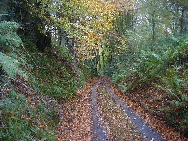 The sunken lane down to Forest Farm