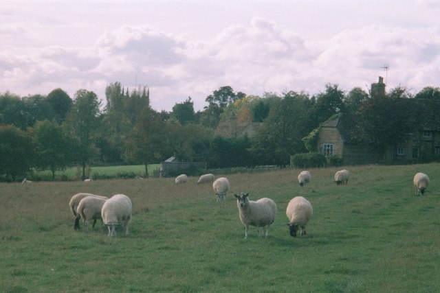 Sheep field near Spelsbury