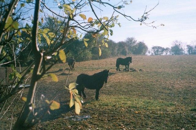 Paddock near Charlbury