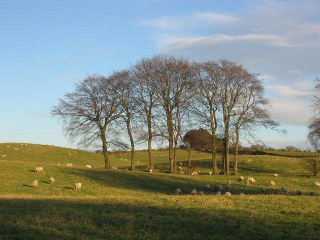 Sheep pasture, Broom.