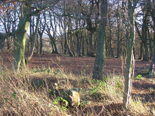 Beechwood on the edge of Gardrum Moss.
