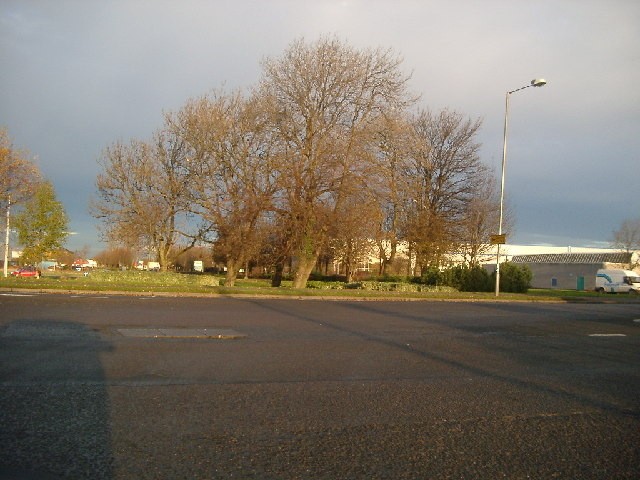 Trees in West Mains Industrial Estate, Grangemouth