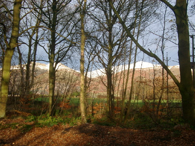 Roadside trees near Muircot