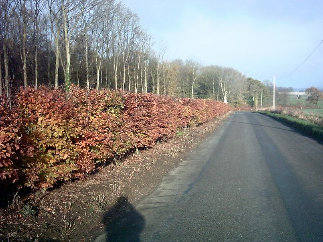 Beech Hedge by Lodge Wood
