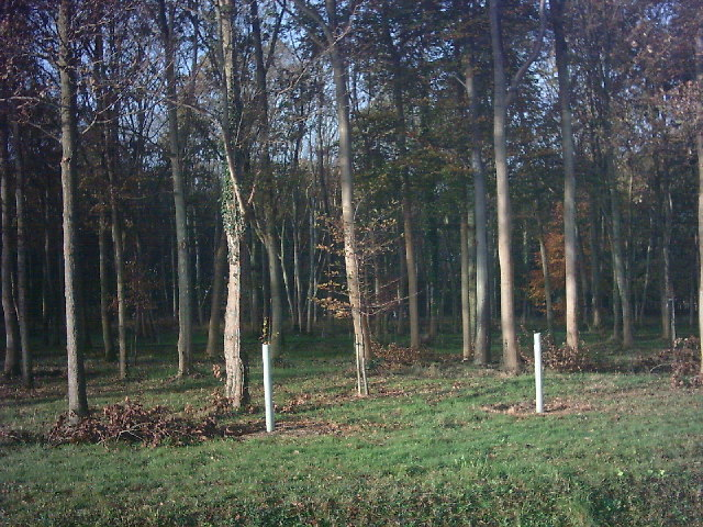 Part of Lodge Wood