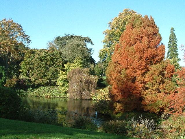 Sandringham House Gardens, Autumn plumage !