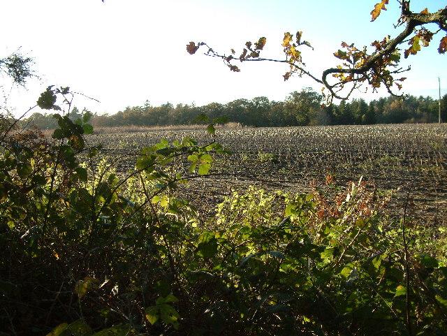 Farmland, North Ripley, near Ringwood