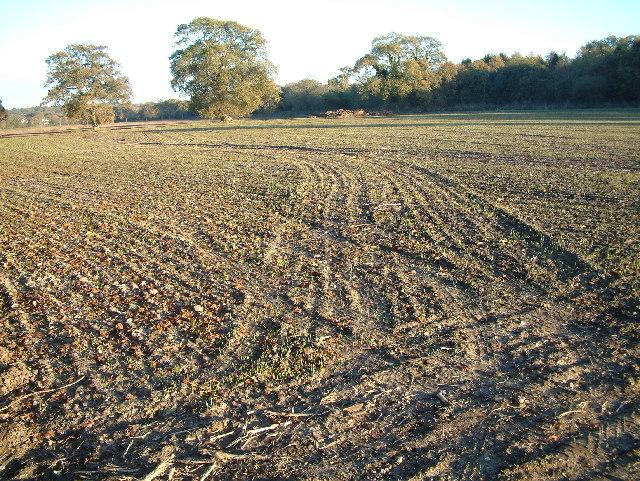 Farmland, North Bockhampton, Bransgore
