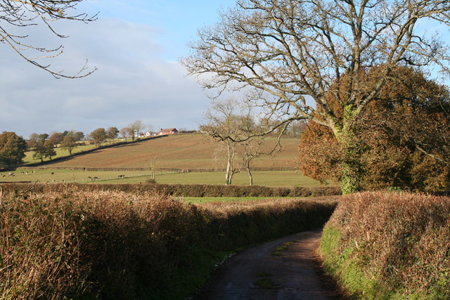 Halberton: lane near Leonard Farm