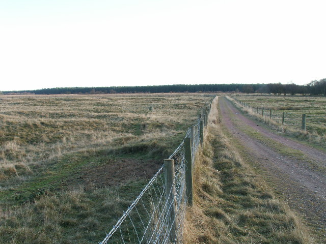 Looking towards Reres Wood