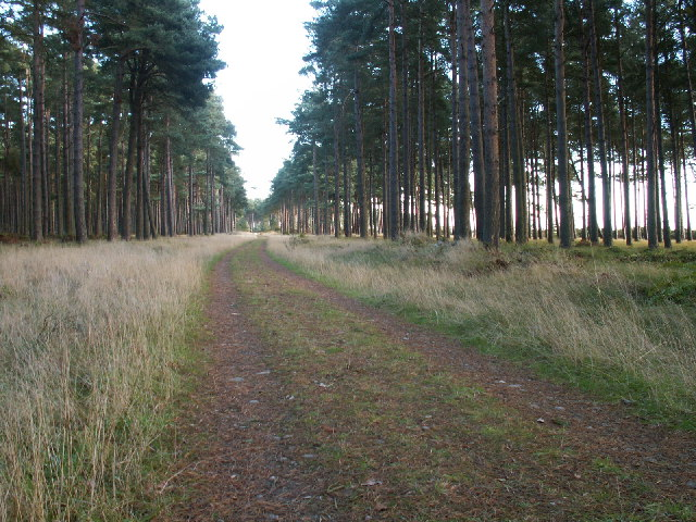 Road through Reres Wood