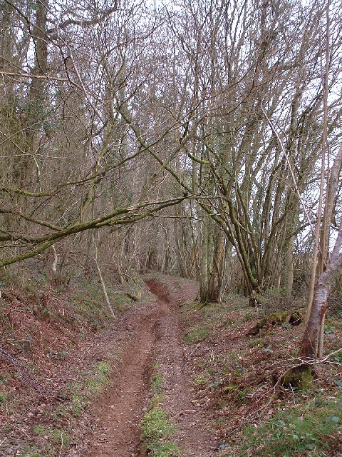 Woodland near Cothelstone Hill