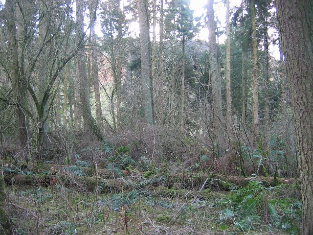 Woodland, Norman's Law.