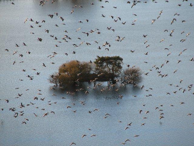 Geese land on North Third Reservoir