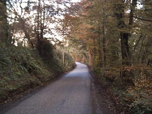 Exe Valley Way above Iron Bridge