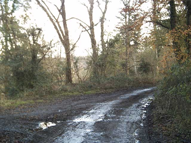 Exe Valley Way near Holmingham Wood