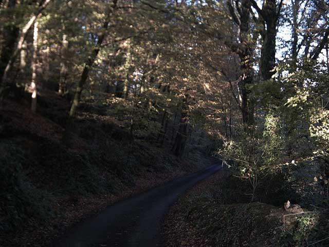 Exe Valley Way near Bampton