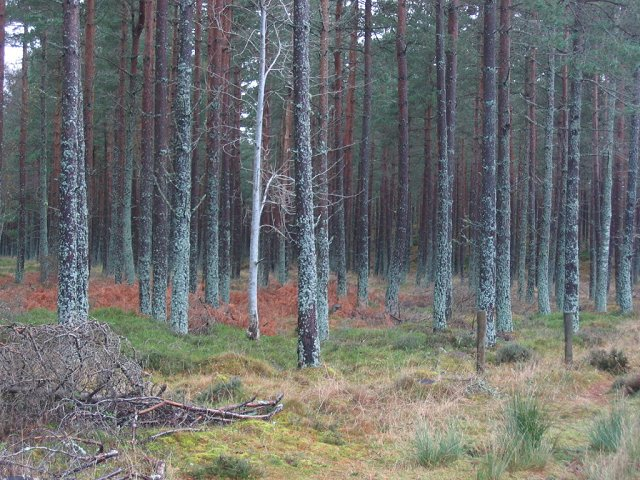 Forest, Bogarn.