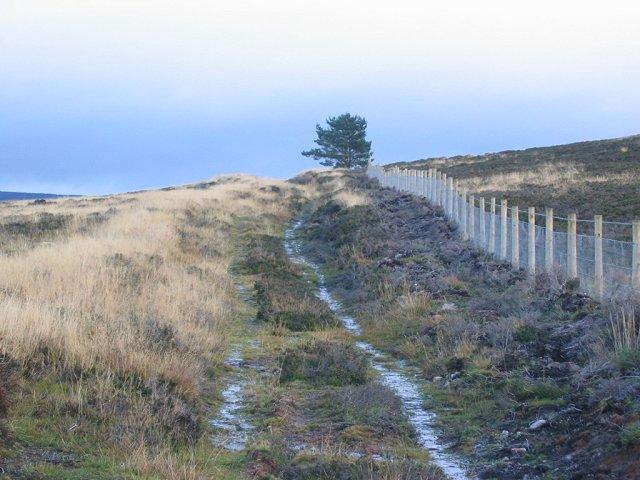 New fence on Blarourie