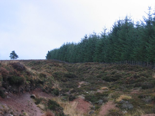 Forest Edge, Blarourie.