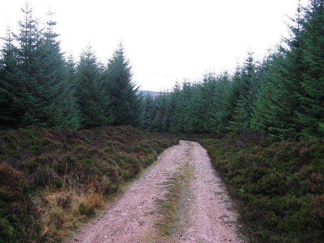 Forest road, Kerloch