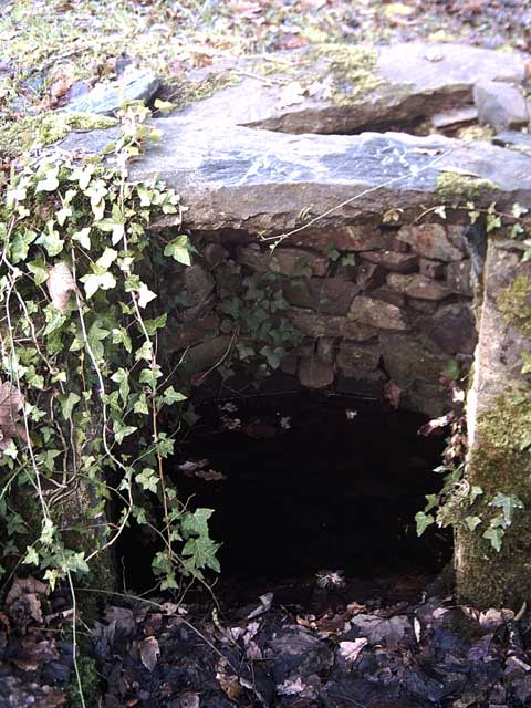 Well at Holmingham Wood