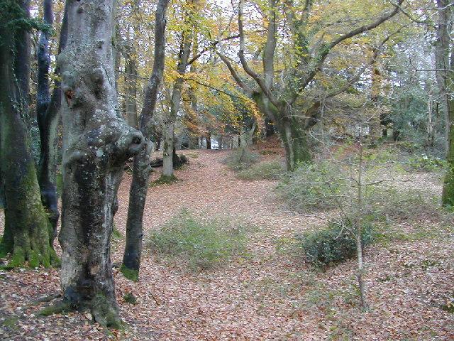 Blackhamsley Hill Deciduous Woods