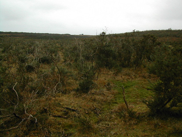 Heathland South of Blackhamsley Hill