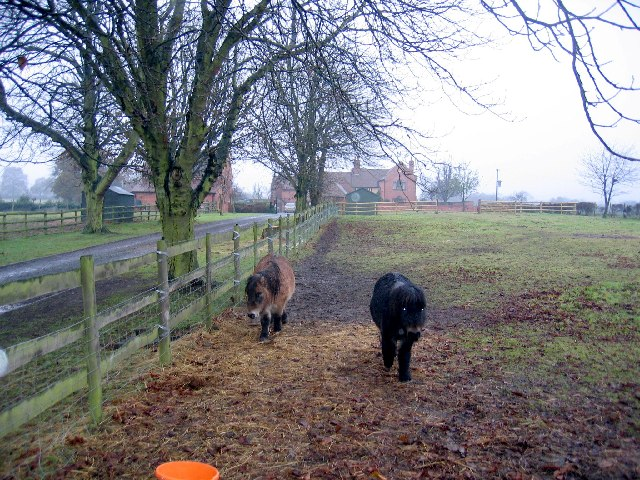 Ponies at Jerrings Hall Farm