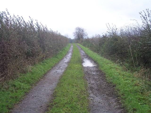 Farm Track to Mordon's Wood