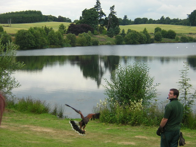 Bird of Prey Centre, Blairdrummond Safari Park