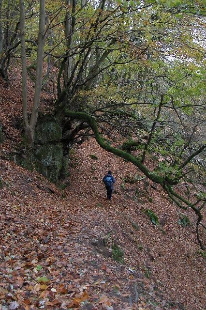 Offa's Dyke Path above Bigsweir