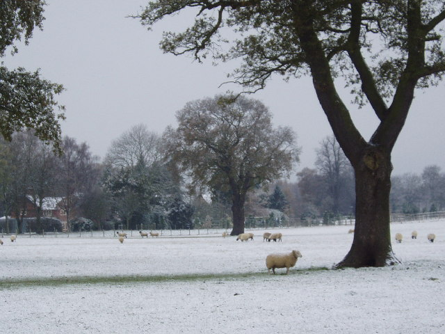 Astle Park in winter