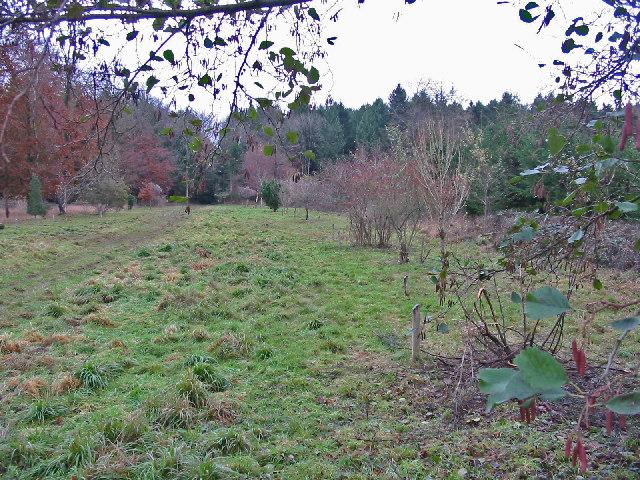 Coronation planting, Micheldever Wood Hampshire.
