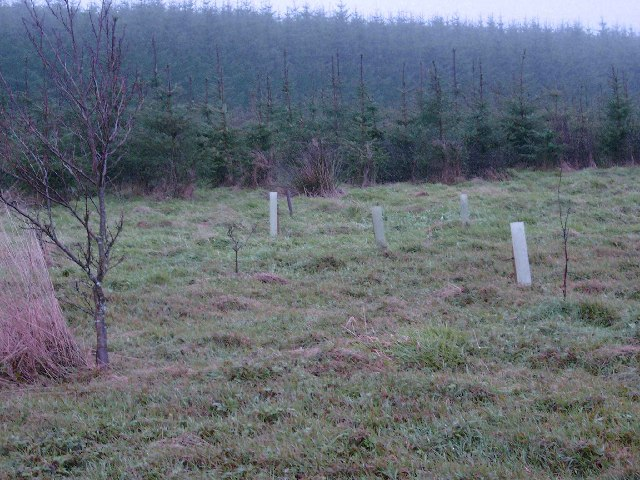 New tree planting in the Red Bog