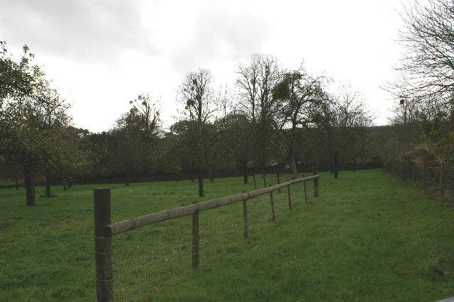 Apple Orchard in Christon