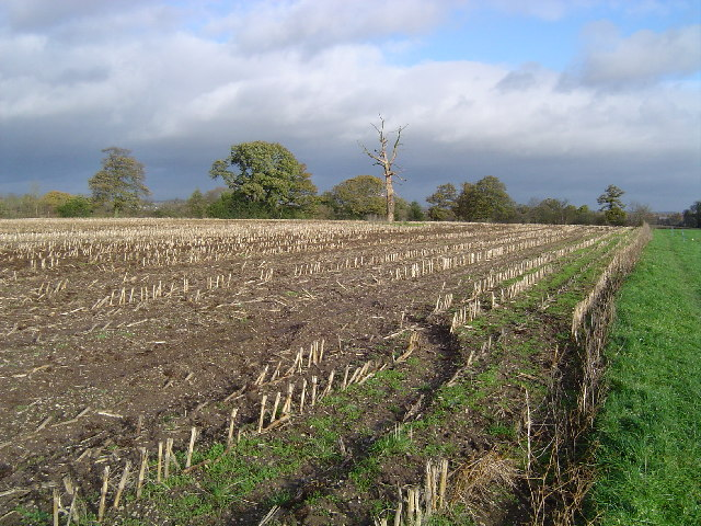 Harefield: Stubble field, Hill End